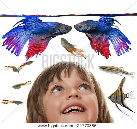 little girl looking at aquarium with Betta splendens - siamese fighting fish and other aquarium fish