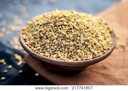 Trigonella Foenum-graecum,methi,fenugreek In A Clay Bowl.