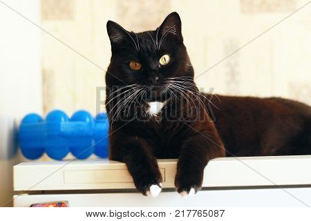 Portrait of black cat with white whiskers and eyebrows