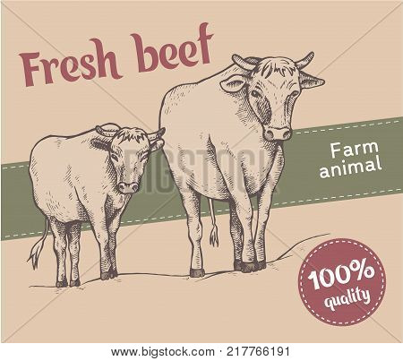 Cow and a calf walk along the road. Sketch style. Bull and calf return one by one from the pasture. Farm animals. Fresh beef. High quality. Vector illustration.