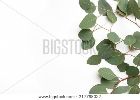 Frame, border made of green Silver dollar Eucalyptus cinerea leaves and branches on white background. Floral composition. Feminine styled stock flat lay image, top view, copy space.
