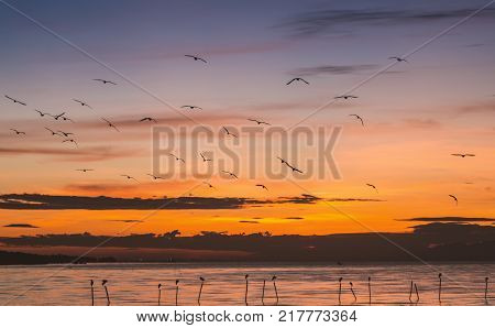 Morning scene of flying seagulls over sea surface at Bangpu Samutprakarn of Thailand. Seagulls come to this place every winter season.