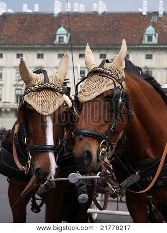 Horse in Wien