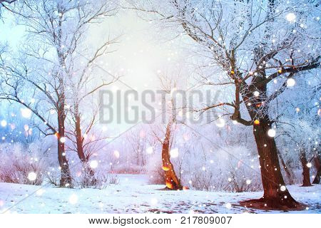 Beautiful Winter landscape scene background with snow covered trees and ice. Christmas landscape. Beauty sunny winter backdrop. Wonderland. Frosty trees in snowy forest. Tranquil winter nature.