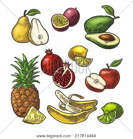Set fruits. Isolated on the white background. Pineapple, lime, banana, pomegranate, maracuya, avocado. Vector color hand drawn vintage engraving illustration for poster, label and menu.