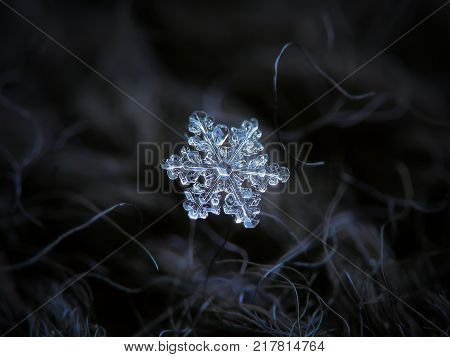 Real snowflake glowing on dark textured background. Macro photo of real snow crystal: small stellar dendrite with glossy relief surface, fine hexagonal symmetry and short, ornate arms.