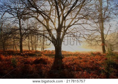 Early mist and fog at first light in a forest landscape with autumnal fall colors in the foliage undergrowth.
