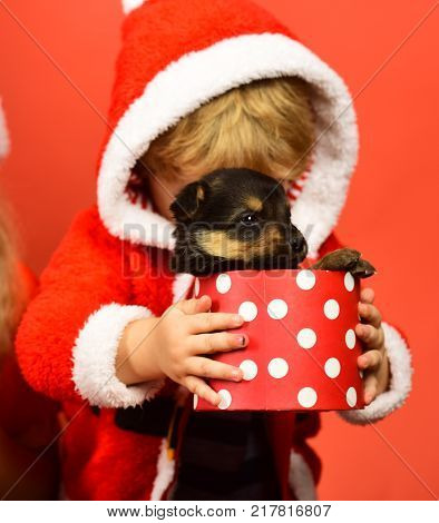 Little Santa holds little dog in spotted box. Boy in xmas hood cuddles with puppy. New year of Dog concept. Kid with hidden face unpacks present boxes with puppy on red background.