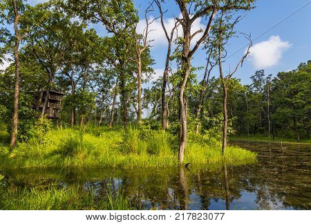 Beautiful view inside of the forest in the Chitwan, Nepal
