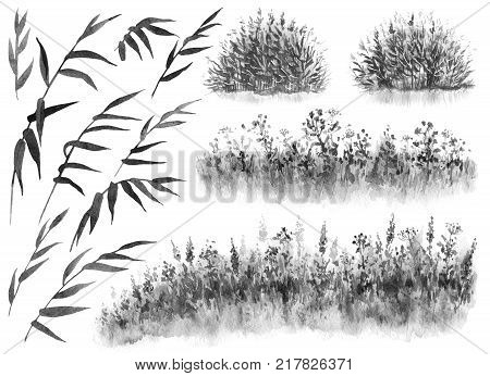 Watercolor painting. Hand drawn illustration. Set of monochrome reed branches cane thicket and grass. Nature scene design element.