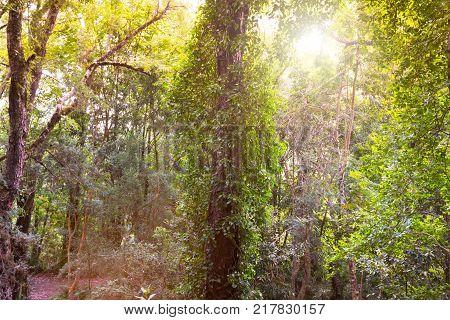 Forest in Parque Philippi in Puerto Varas Chile