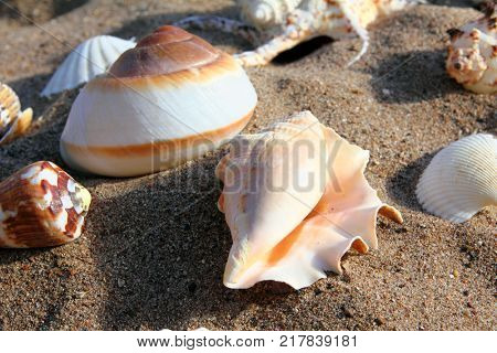 close-up view on seashells on the sand