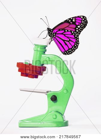 Too smart butterfly. A magenta-colored monarch butterfly, Danaus plexippus, looks at a green toy microscope. Isoleted objects on white background