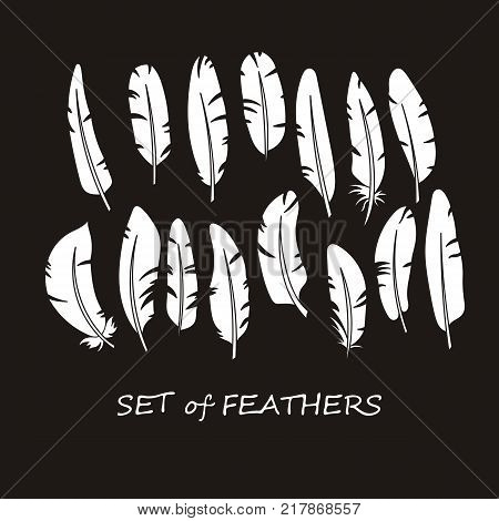Vector Ornate Set of Stylized and Abstract Silhouette Feathers. Elements for Design and Coloring Pages.