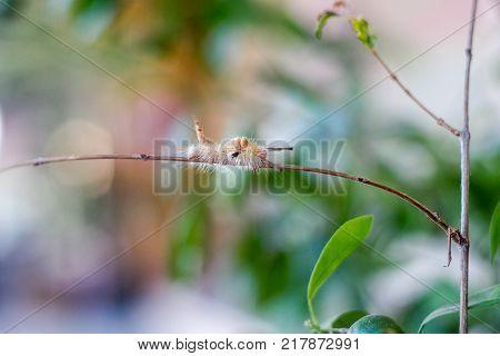 Caterpillar worm walking on tree, selective focus on worm