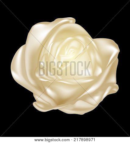 black background and golden-colored fantasy flower rose