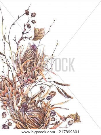 Watercolor botanical flowers, protea, wildflowers, twigs, branches and leaves. Dry vintage bouquet, greeting floral card isolated on white background. Nature illustration