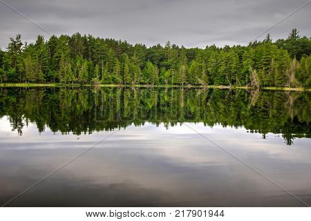 Wilderness Lake Reflections. Pine forest reflected in the clear pristine waters of a wilderness lake in a northern Michigan forest.
