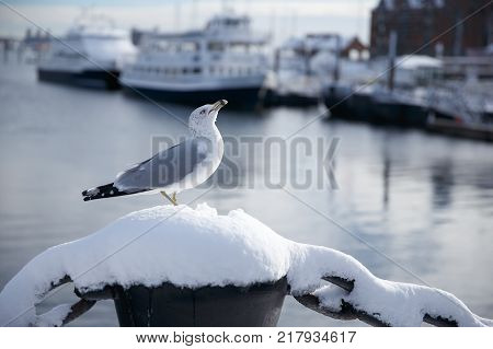 Seagull at the port. Winter marina. Wildlife in the city