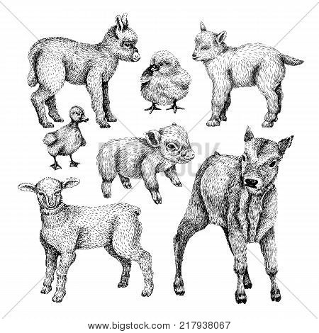 Farm baby animals set. Hand draw line art style illustration. Sketch of cute calf, duck, lamb, goat, chicken, pig, donkey. BLack and white vector image.