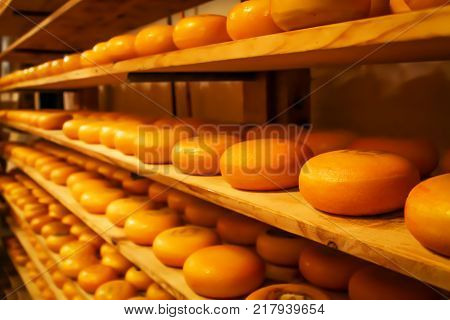 Rows of cheese pieces on wooden shelves in store or at milk factory. Different kinds of cheeses on shelves. Whole pieces of cheese ripen in cellar. Cheese storage