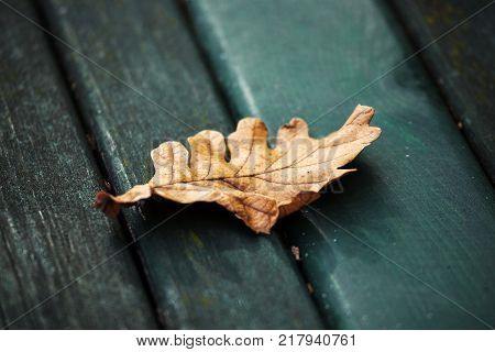yule log autumn fallen leaf isolated on park bench