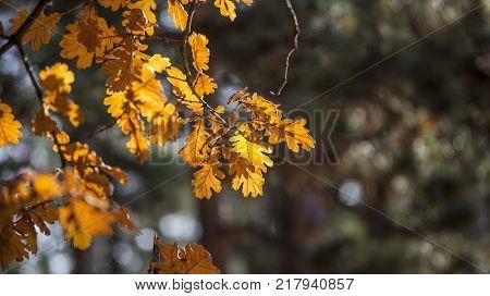 nature autumn yule log orange tree leaves