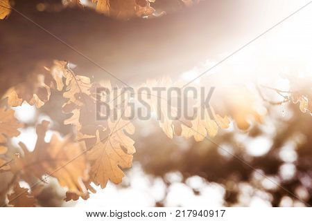 nature yule log tree branch with orange leaf sunshine. tree sun light