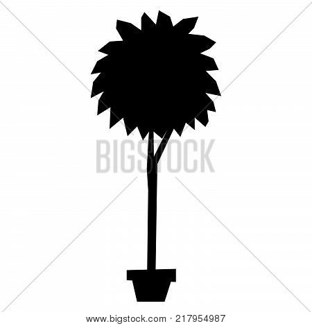 Vector Cartoon Bonsai Isolated On White Background