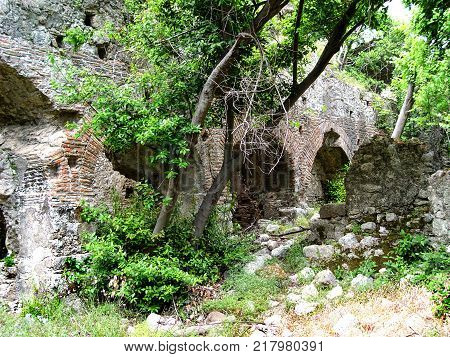 Forested over the walls of the ancient city of Olympos. Turkey