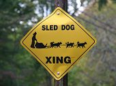 Yellow and Black Sled Dog Crossing sign in a rural forest area. poster
