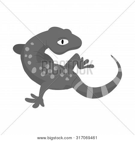 Vector Design Of Gecko And Lizard Sign. Collection Of Gecko And Cute Stock Vector Illustration.