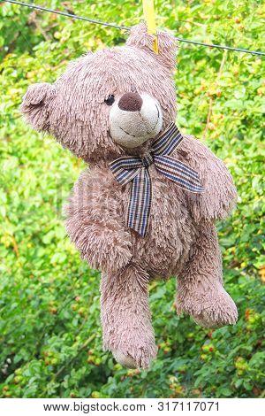 The Teddy Bear Dries