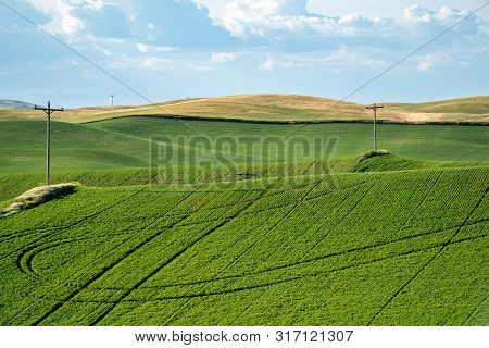 Farmland And Grasses, With Powerlines In The Palouse Region Of Washington State, Near Colfax, Wa