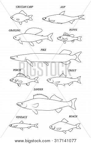 Freshwater Fishes (carp; Crucian Carp; Asp; Ruffe; Grayling; Pike; Perch; Trout; Zander; Vendace; Ro
