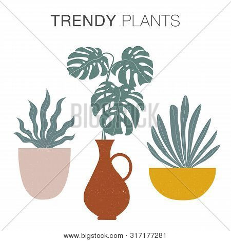 Modern Plants In Pots Collection In Trendy Earthy Hues