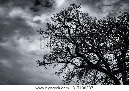 Silhouette Dead Tree And Branch On Dark Sky And Clouds. Background For Death, Hopeless, Despair,sad,