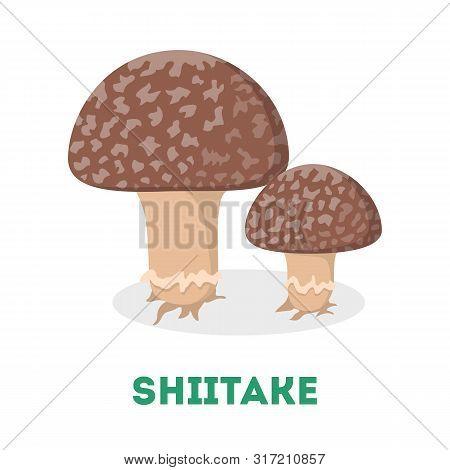 Shiitake Mushroom. Fresh Natural Fungus. Organic Vegetarian