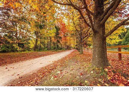 Beautiful Scenic Country Roads In Autumn Lined With Maples And Deciduous Trees With Leaves An Array