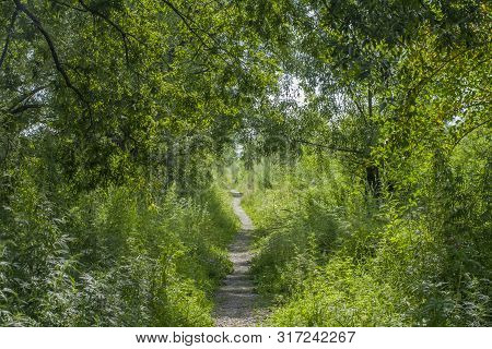 Summer Green Forest Path Landscape. Forest Path In Summer. Summer Forrest Path View. Summer Sunny Fo