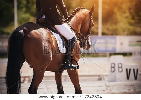 The Rider In A Black And White Suit Performs The Task In Equestrian Competitions In Dressage Riding