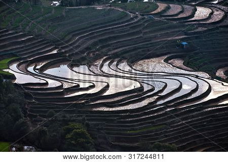 The Rice Terraces At Bada Site In Yuanyang County, China. Bada Rice Terraces Cover An Area Of 950 He