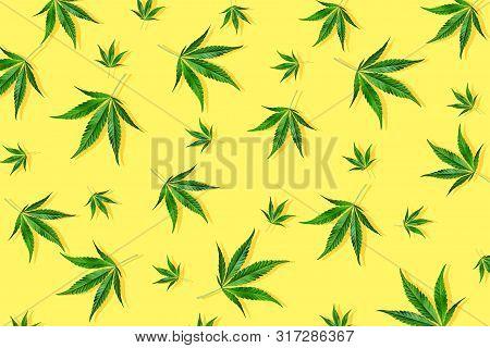 Trendy Sunlight Cbd Pattern With Green Leaf Cannabis On A Light Yellow Background. Minimal Cbd Oil C