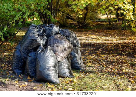 Bunch of withered leaves lying in black bin bags. Seasonal cleaning of city streets from fallen leaves of trees. Autumn season, foliage poster