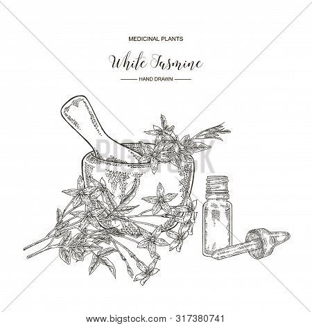 White Jasmine. Jasminum Officinale Flowers And Leaves With Glass Bottle Of Essential Oil. Medical Pl