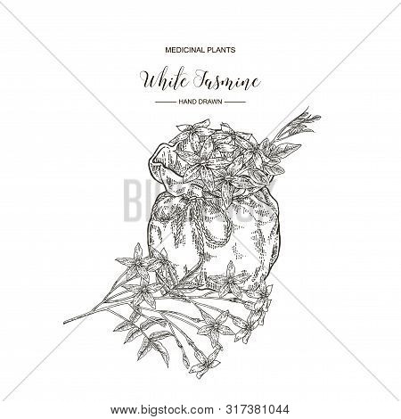 White Jasmine. Jasminum Officinale Flowers And Leaves With Textile Bag. Medical Plants Hand Drawn. V