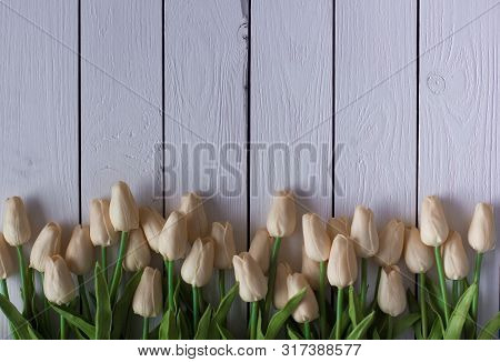 Beautiful White Or Beige Tulips On White Wooden Background. Top View, Copy Space
