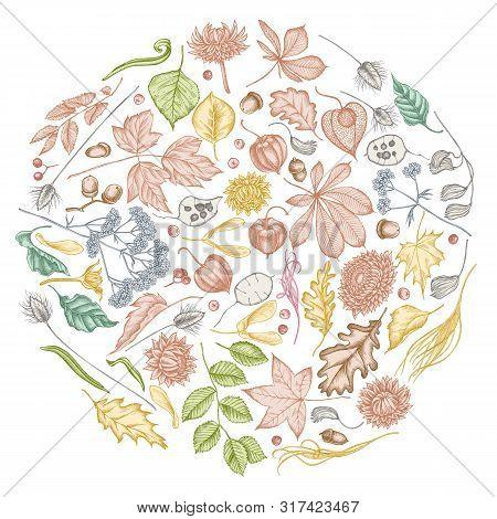 Round Floral Design With Pastel Rowan, Rowan, Acorn, Buckeye, Fern, Maple, Birch, Maple Leaves, Lagu