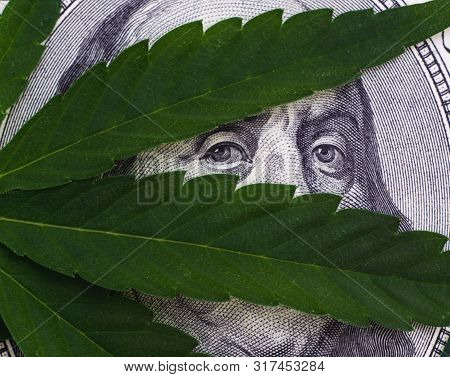 Close-up Photo Of Cannabis Leaves Over United States Dollar Bills Isolated On White Background. Hemp