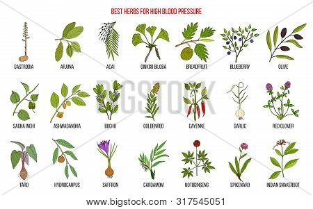 Best Herbs That Lower High Blood Pressure. Hand Drawn Vector Set Of Medicinal Plants